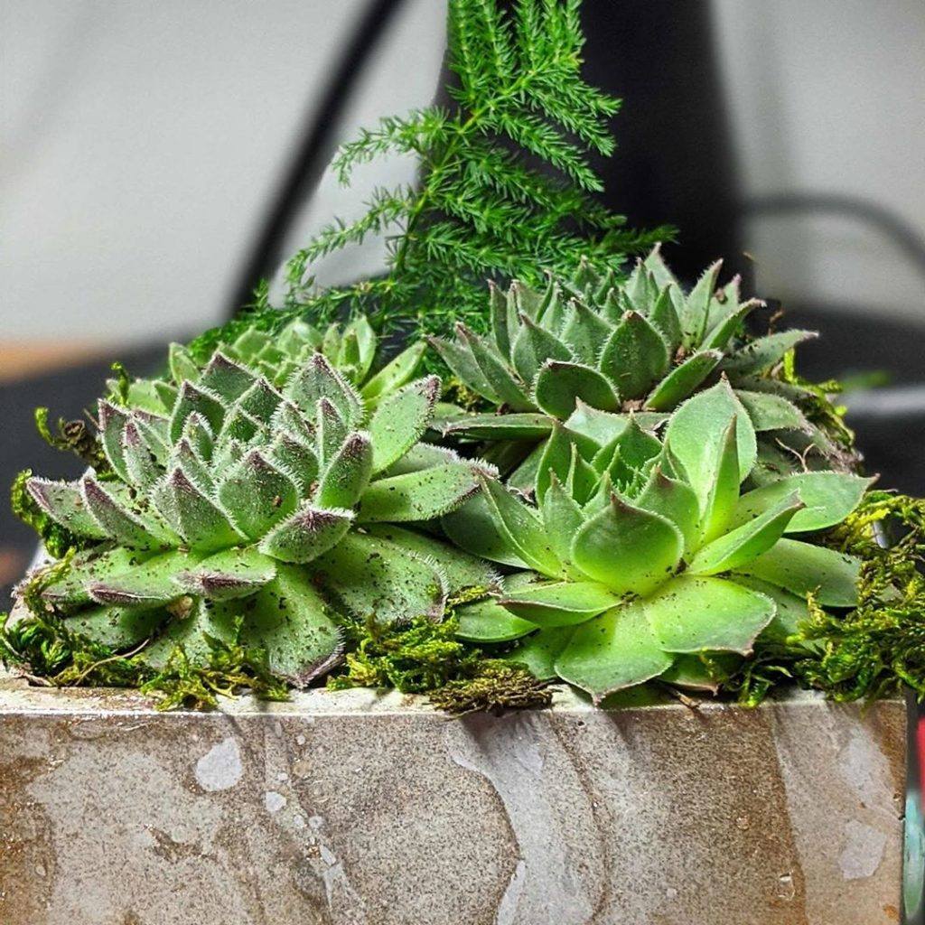 GROW Garden Box Medium 3