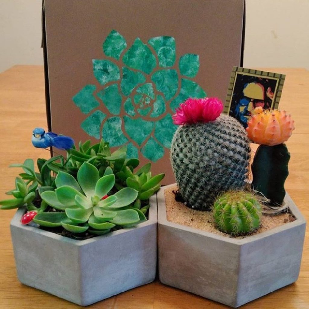 grow garden box large2 1080sq