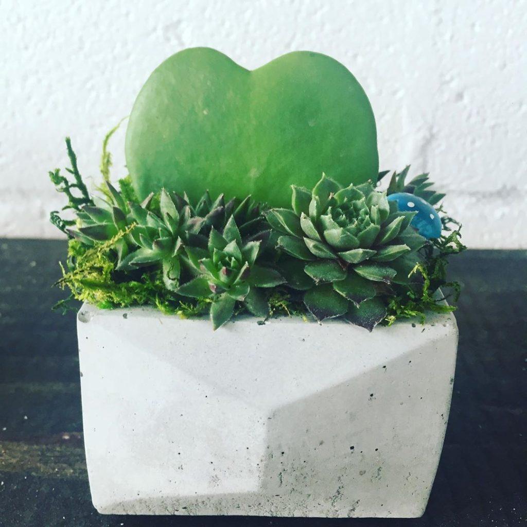 grow garden boxes 10